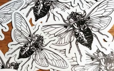 My desk is swarming with cicada stickers and magnets