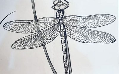 It was time for another dragonfly