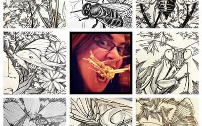 Art vs Artist, insect edition