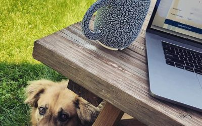 Nikki's coworking picnic table and dog park is open for business