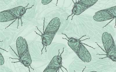 Another cicada pattern