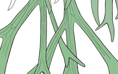 Drawing some staghorn ferns