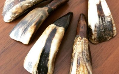 I bought antique buffalo teeth today, what about you?