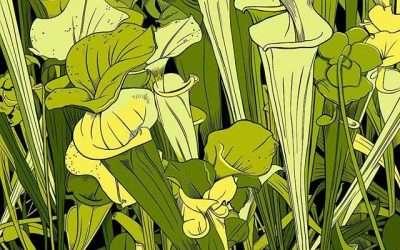 More carnivorous plants