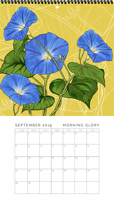 September - Morning Glory