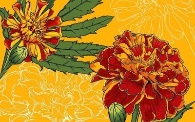 I felt the need to revisit the marigold I drew last week