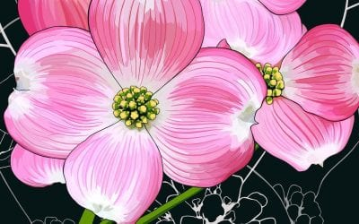 Dogwoods are the State Flowers for both North Carolina and Virginia.