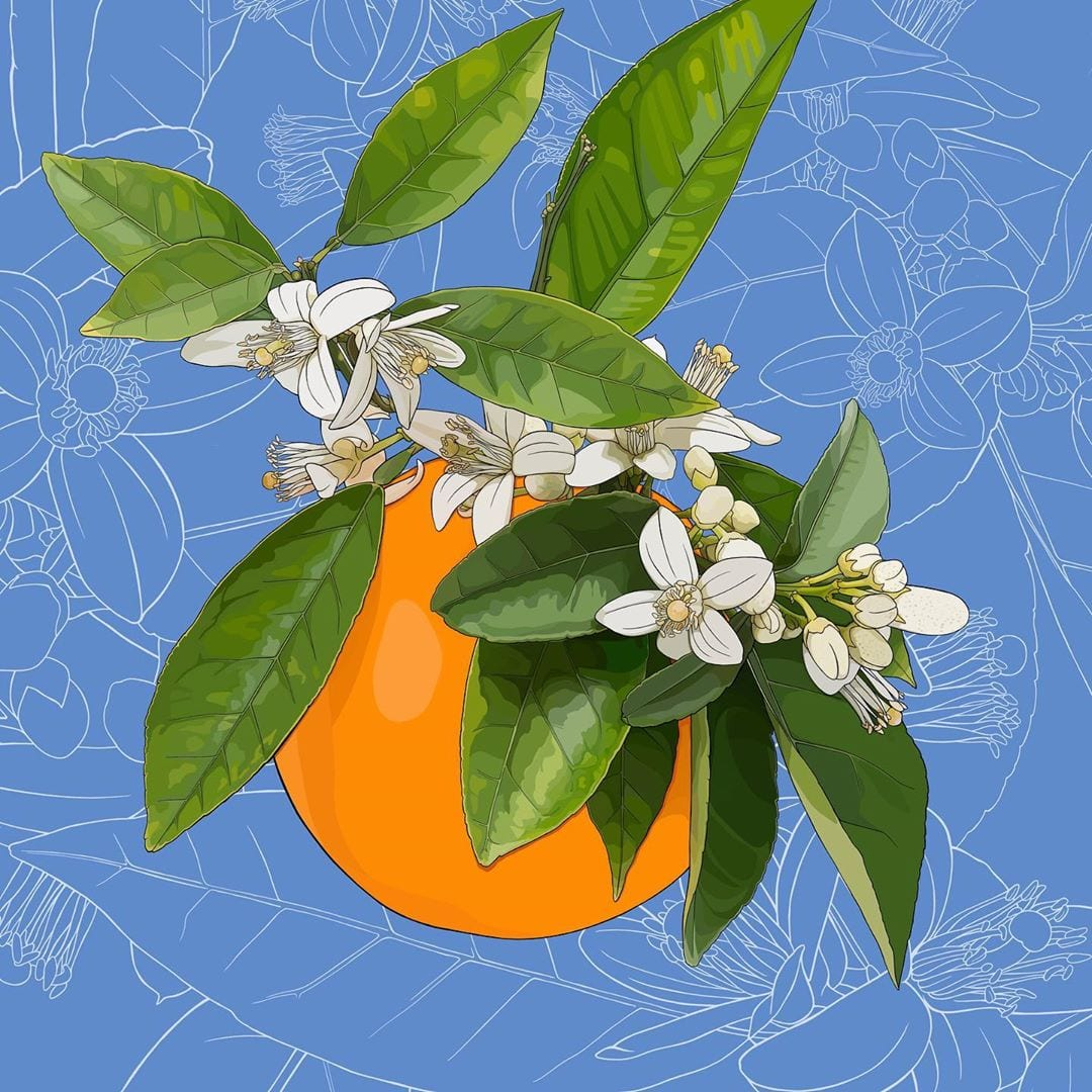 I don't know about you, but I need a shot of color on this Monday morning. Florida's state flower is, unsurprisingly, the orange blossom! , it's your turn to post your version!