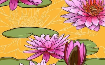 Free wallpapers for your devices? This is July's birth month flower, the waterlily!