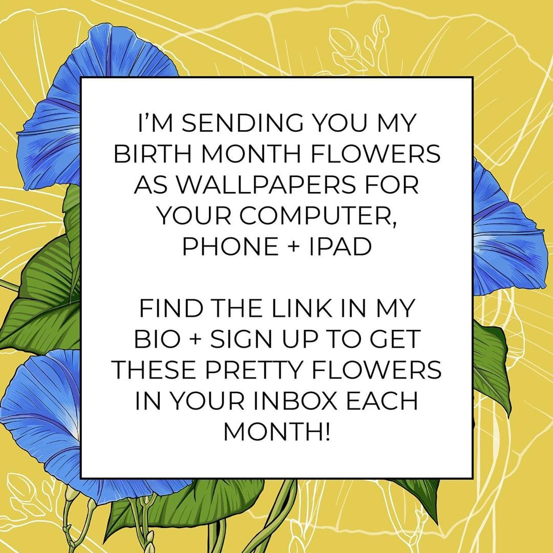 It's that time again! Flower wallpapers for everyone! September's birth month flower is the morning glory.