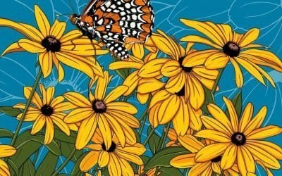 Black Eyed Susan and Baltimore Checkerspot Butterfly