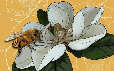 Yep, it's another magnolia and honeybee!