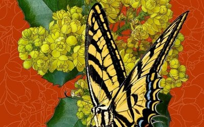 I added an Oregon swallowtail butterfly to these Oregon grape flowers.