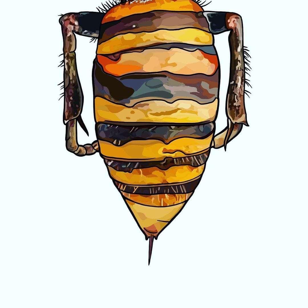 Work in progress. Murder hornet.