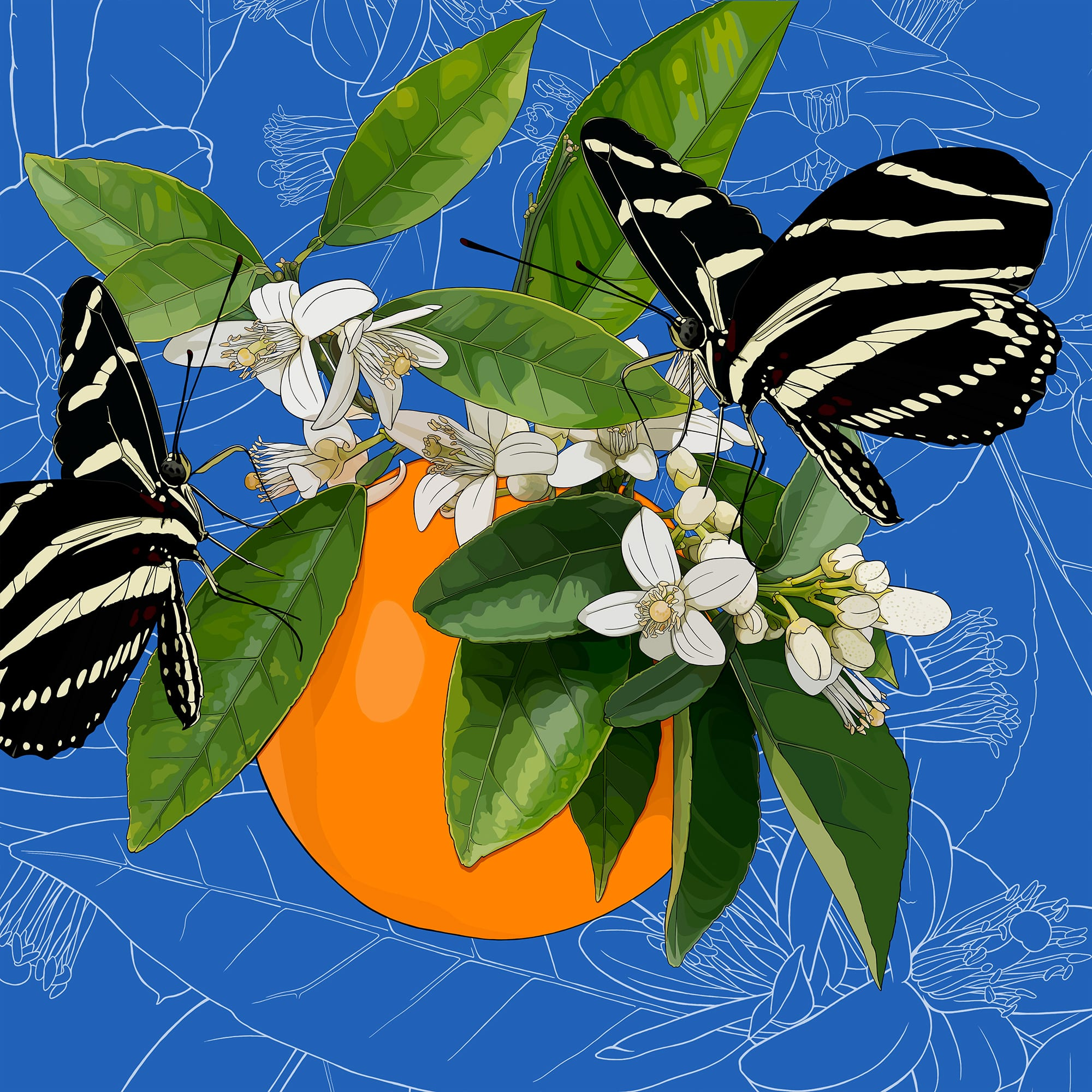 Florida: Orange Blossoms + Zebra Longwing Butterfly