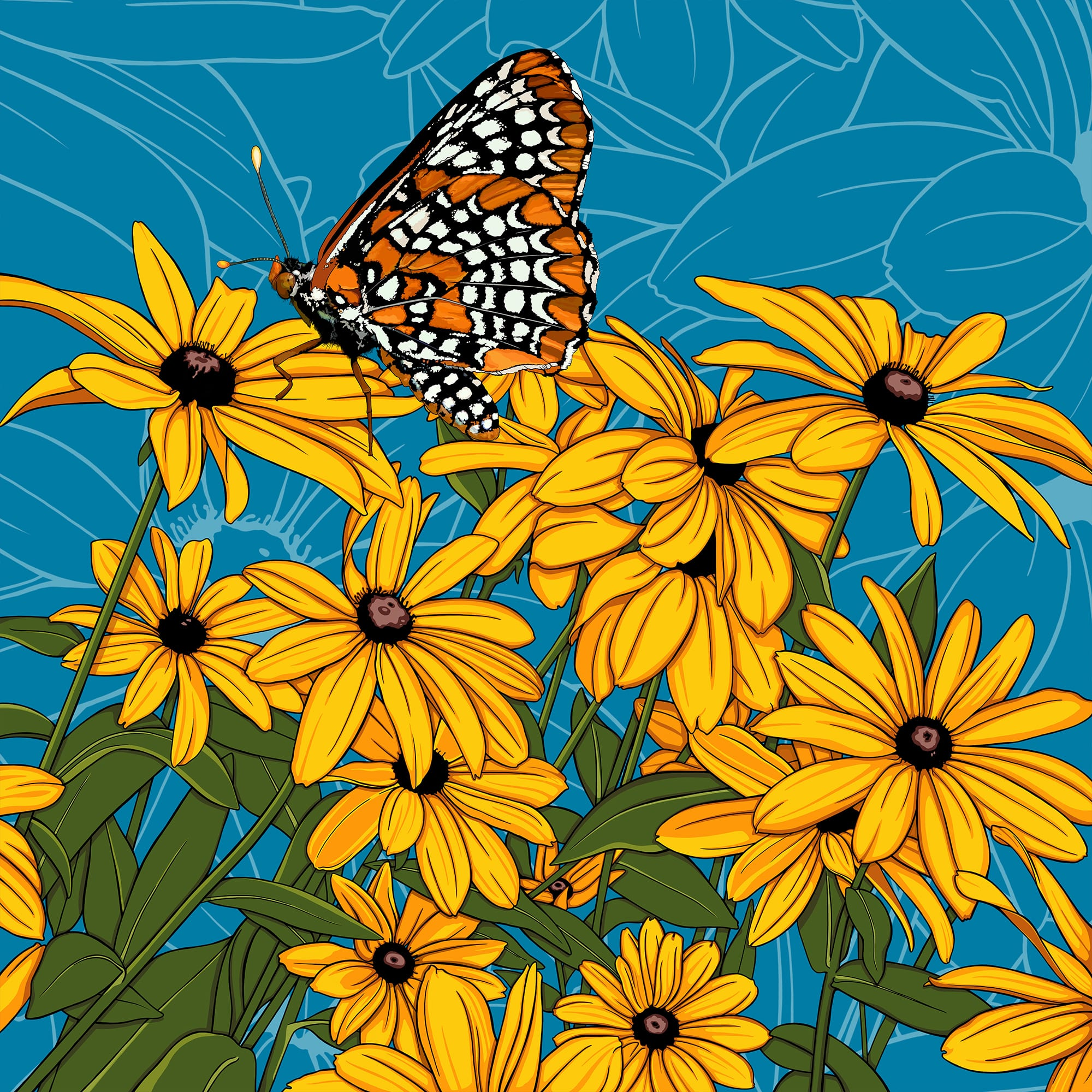 Maryland: Black-eyed Susan + Baltimore Checkerspot Butterfly
