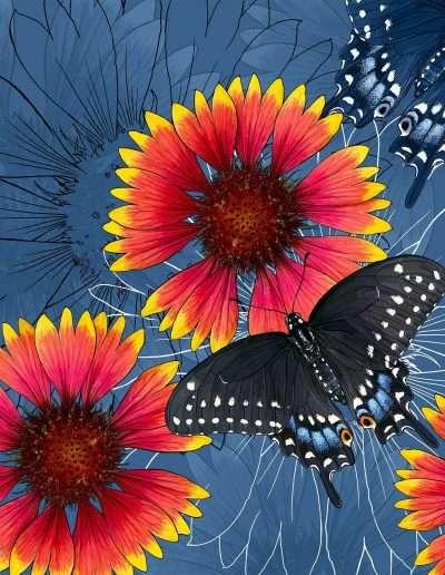 Oklahoma: Indian Blanket + Black Swallowtail Butterfly
