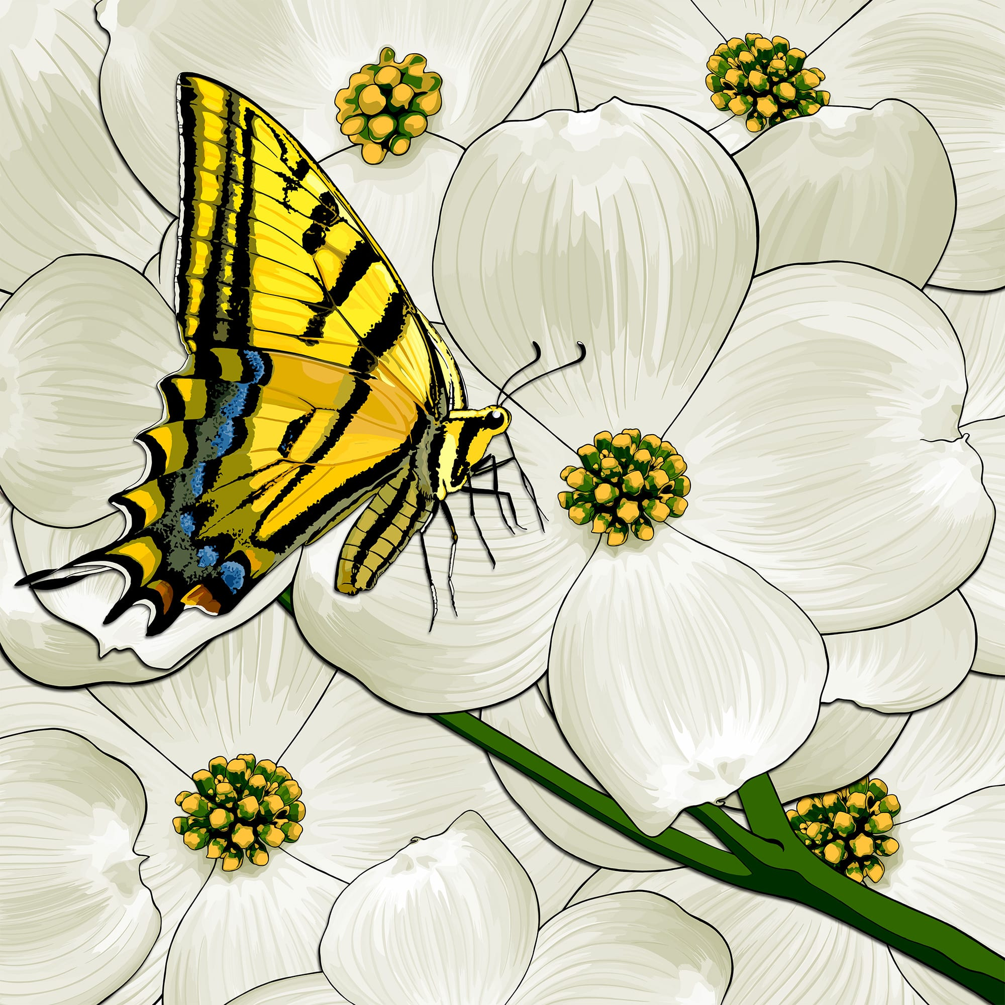 Virginia: Dogwoods + Tiger Swallowtail Butterfly