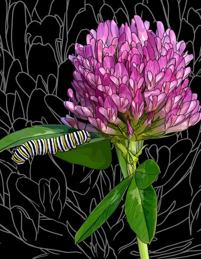 Vermont: Red Clover + Monarch Butterfly